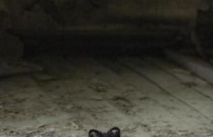 Série de fotos retrata casas abandonadas que agora são abrigos para animais