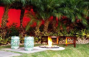 Algumas espécies de plantas são muito resistentes e de cuidados simples, consideradas anuais, perenes e sustentáveis. Na foto, palmeira Phoenix roebeline