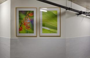 Galeria do Fotógrafo, de Pedro Mendes