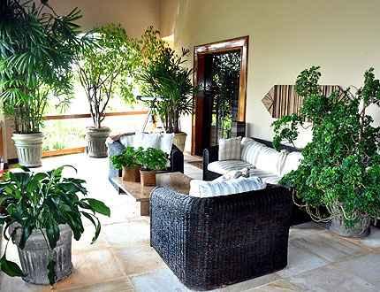 As plantas dentro de casa podem ser uma sa�da para amenizar o clima (Eduardo Almeida/RA Studio)