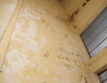 Tenho uma parede com umidade o que fazer