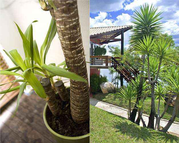 plantas de jardim que resistem ao sol ao sol pleno – SXChuBanco