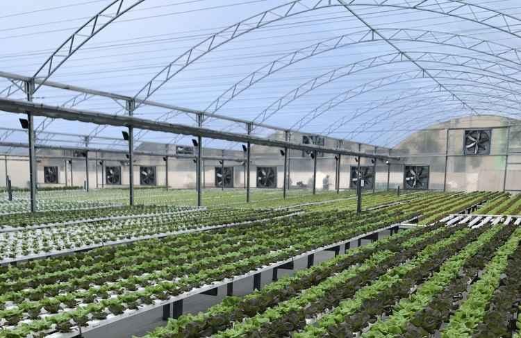 Fazenda urbana com estufa de 1,5 mil m² é a mais nova atração em shopping de BH
