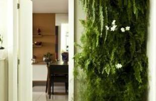 Recorrer a plantas na decoração ajuda a criar ambientes mais acolhedores. Mesmo em pequenos espaços dentro do imóvel, elas transmitem uma sensação de frescor, vida e bem-estar