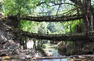 Algumas pontes, além de unir um lugar ao outro, são incríveis obras de arte que atraem turistas de todo o mundo. Ao atravessá-las, os pedestres adquirem uma experiência única. Na foto, pontes naturais de Meghalaya, na Índia