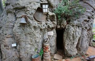 Bar na África do Sul convida a encontrar os amigos dentro de árvore milenar. Pub foi construído no interior do tronco de um baobá de mais de 40 m de circunferência e origem anterior ao nascimento de Cristo