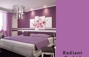Cativante e enigmática, orquídea radiante é a nova cor da decoração em 2014, segundo a Pantone. Com nuances e variações de fúcsia, roxo, lilás e rosa, o tom pode ser usado com cautela em pintura, adornos e acessórios