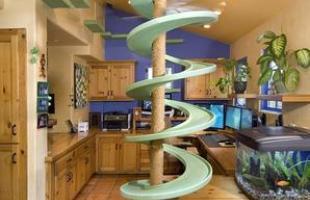 Homem gasta mais de R$ 80 mil para fazer de sua casa um playground para gatos. Dono de 18 felinos, ele contratou uma empresa especializada para transformar o imóvel onde vive na Califórnia em um espaço de pura diversão para os bichanos