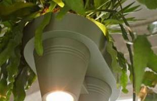 Designer cria peça que reúne lustre e plantas e otimiza o espaço. Com dupla função, vaso acopla as espécies vegetais suspensas a lâmpadas