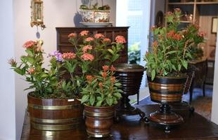 Exposição de vasos raros, cachepôs e floreiras, com peças do século 19 da Europa e da Ásia, integram a programação do Circuito DMAIS, na galeria Sandra & Márcio, no Sion, em BH