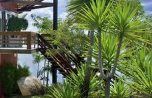 Algumas espécies de plantas são muito resistentes e de cuidados simples, consideradas anuais, perenes e sustentáveis. Na foto, iúca