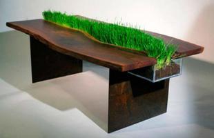 Mesa de centro com erva de gato