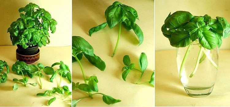 Conheça 12 alimentos que você compra uma vez e pode replantar facilmente em hortas caseiras