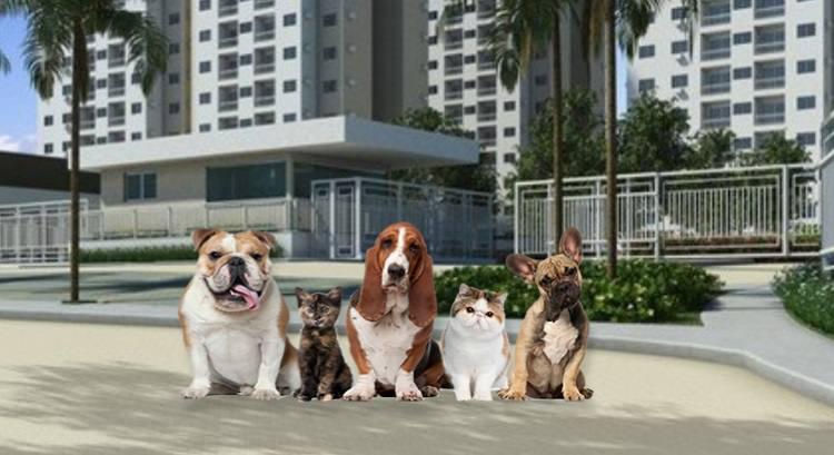 Ter animais em condomínios requer cuidado quanto ao respeito aos demais moradores