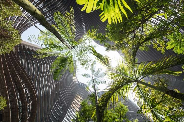 Prédio em Cingapura faz releitura de floresta tropical com mais de 700 árvores