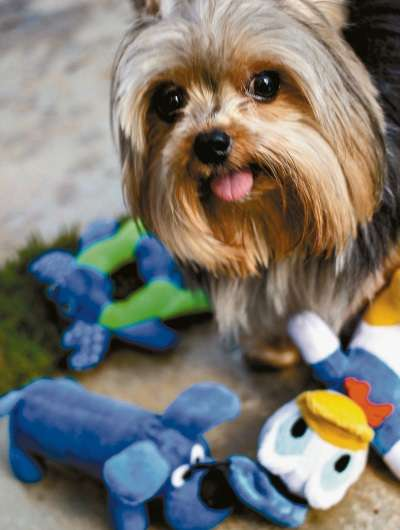 STJ  determina que condomínios não podem coibir a presença de pets nos apartamentos